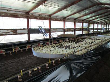 ひかり酵素による循環型畜産経営(養鶏の例)